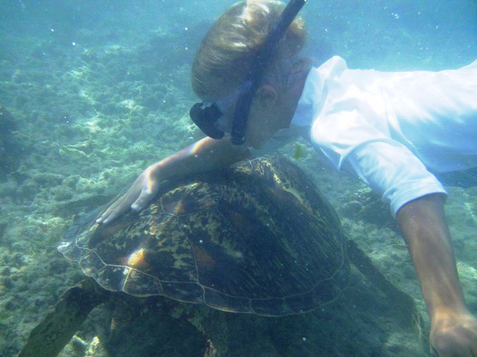 turtle cannibalism mar an island of surprises new caledonia today